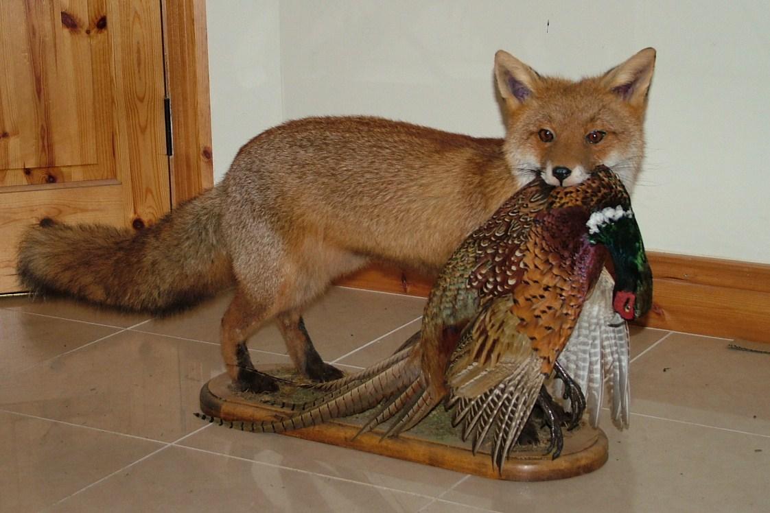 fox-and-pheasant-001