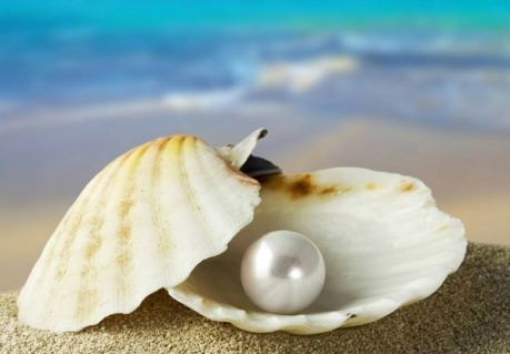 ocean-shells-pearls-oysters-1920x1340-wallpaper_wallpaperswa-com_69